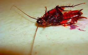 Наглядное представление того, что будет с тараканом после Форсайта