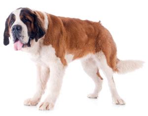 причины глистов у собак