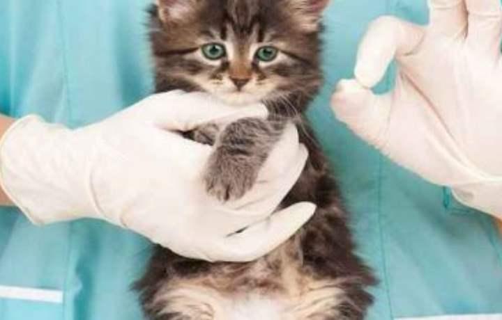 Прием таблеток котом