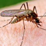 Комар, сидящий на коже человека