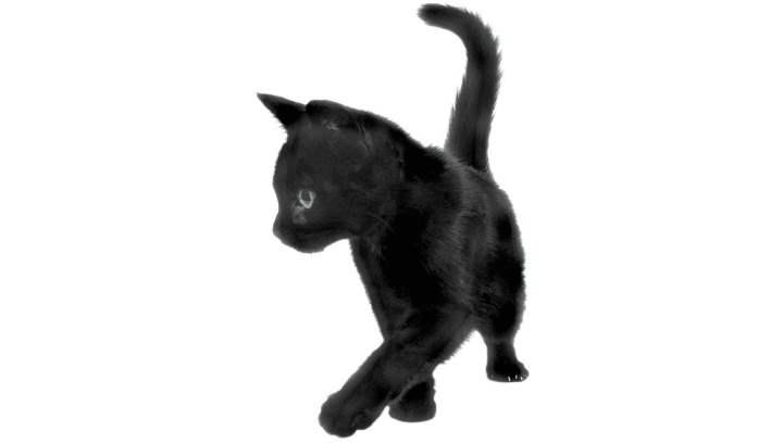 Характер кота
