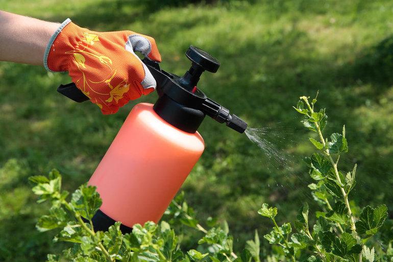 Как избавиться от тли на растениях