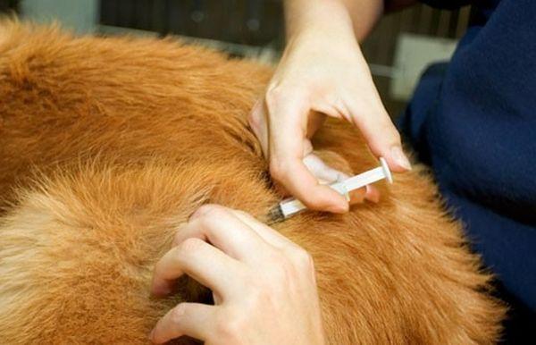 Лечение боррелиоза осуществляется антибиотикотерапией