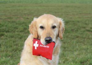 подготовка к родам собаки медикаменты