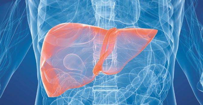 Лечится ли цирроз печени при гепатите С?