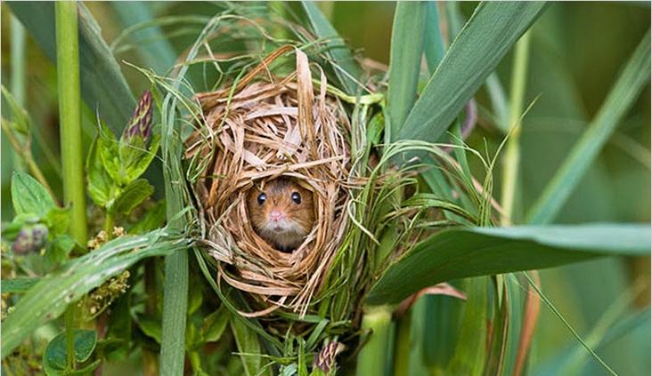 Фото мышиного гнезда на листьях