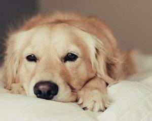 суть стерилизации собак