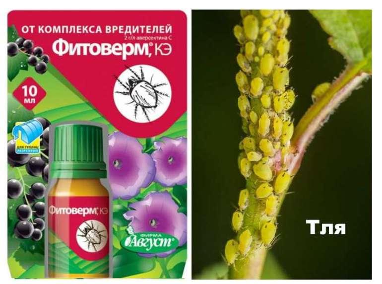 Фитоверм для комнатных растений инструкция