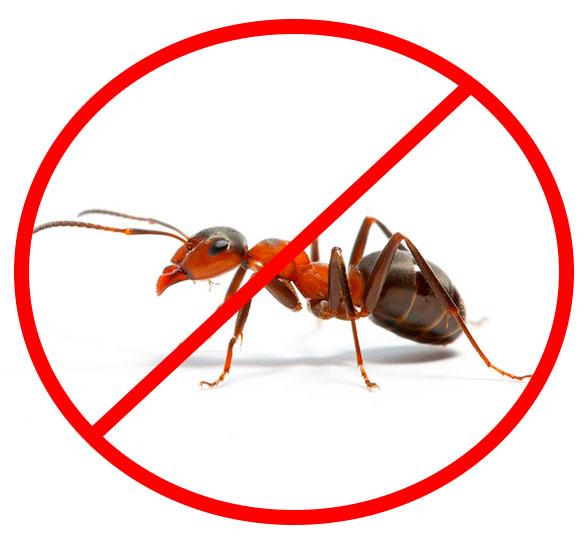 Избавление народными методами от муравьев в квартире или доме