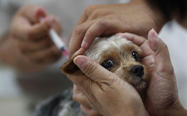 Ветеринар назначает лечение животному