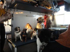 транспортировка собаки в поездах