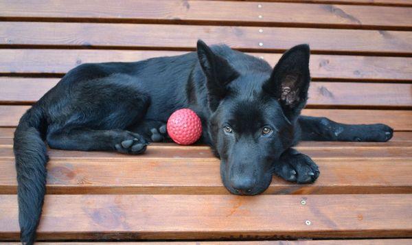 Давайте таблетки Бравекта собаке строго по инструкции