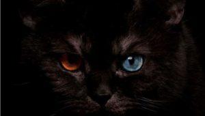 Разные глаза у черного кота