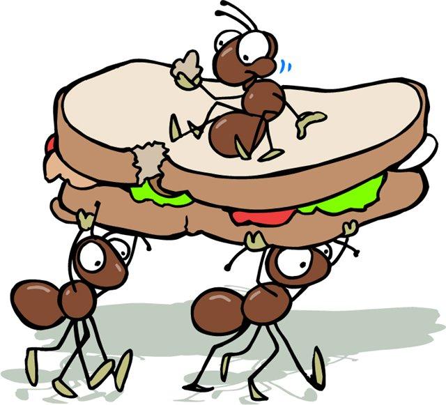 Муравьи поедают все продукты