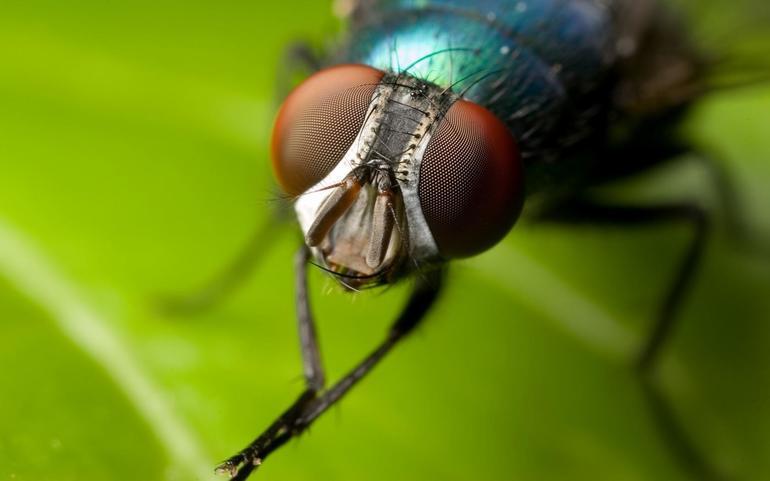К чему снятся мухи в среду