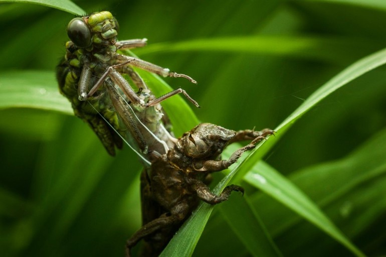 Личинка стрекозы чем питается