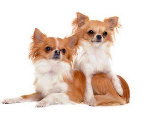 договор о вязке собак