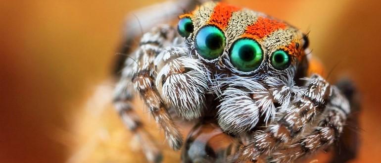 Как выглядят пауки