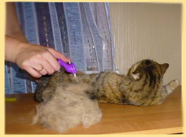 Вычесывание кота фурминатором