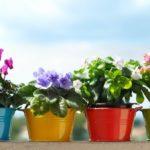 Четыре горшка со цветами