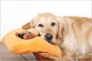 особенности течки у собак