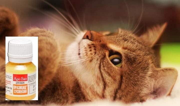 У некоторых кошек симптомы проявляются не сразу