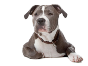 кастрированный пес