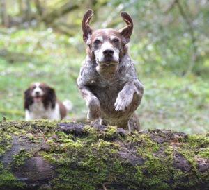 продолжительность жизни собак