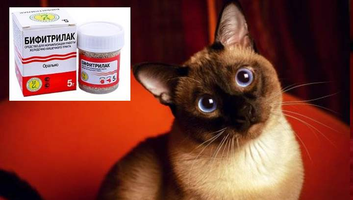 Лечение жкт у сиамских кошек