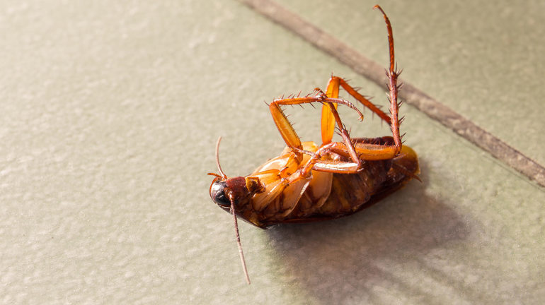 Если человек во сне убил таракана