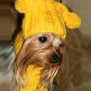 шапка для собак