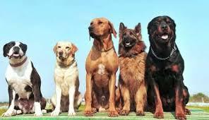 корм для больших собак