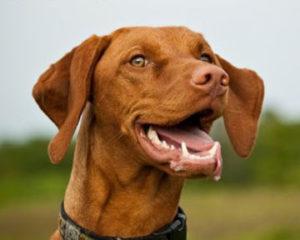 собака лает от счастья