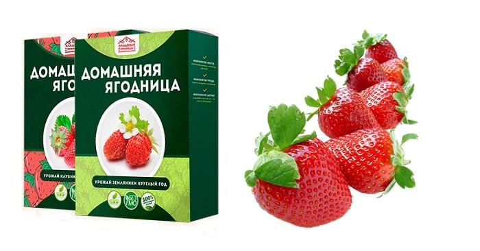 Домашняя ягодница &quot,Кладовая природы&quot, для выращивания клубники: до 10 кг в месяц с каждого куста!