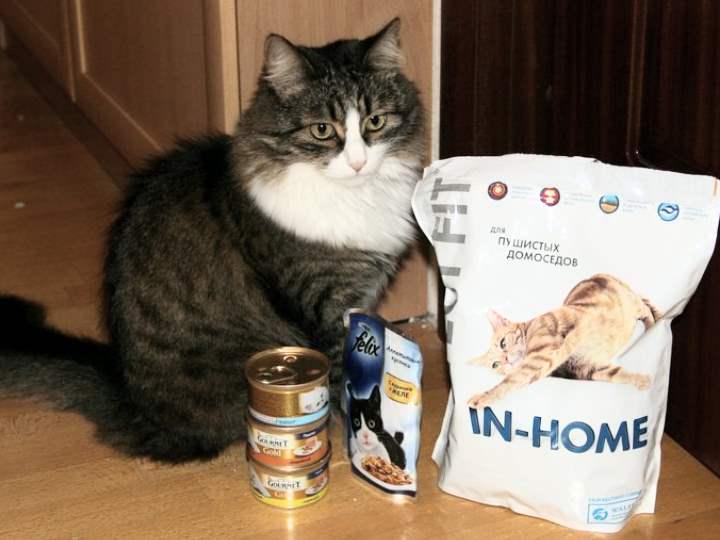 Кошка выбирает корма Перфект Фит для кошек