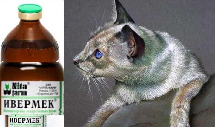 Показания к применению «Ивермек» для кошек