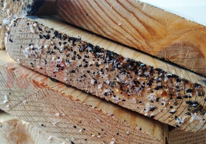Гнездо паразитов на деревянной поверхности