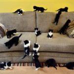 Кошки и котята на диване