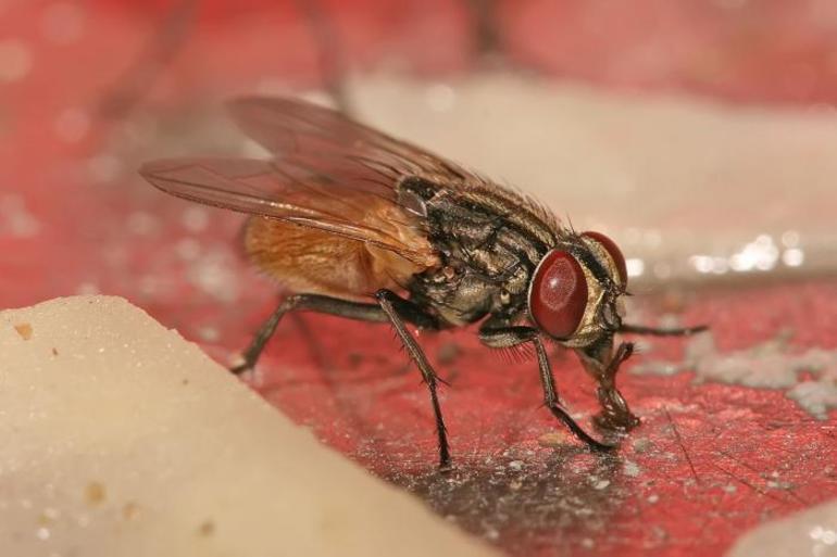Рецепторы мухи