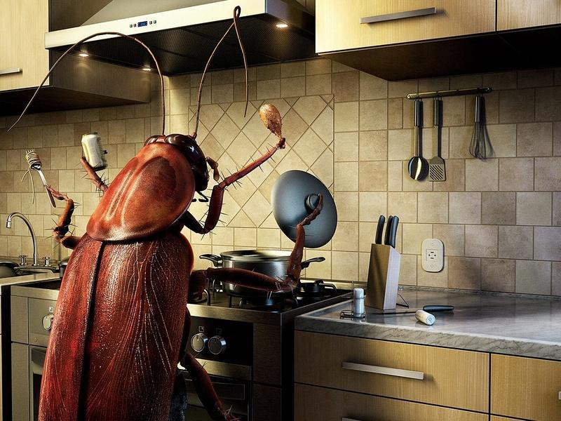 Иллюстрация &quot,Рыжий таракан на кухне&quot,