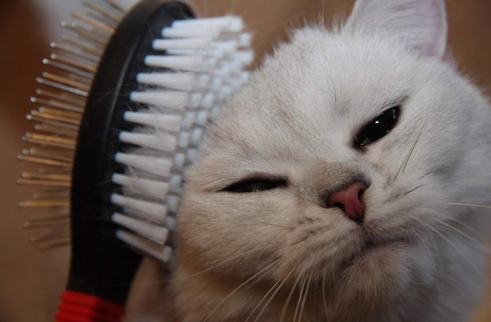 Вычесывание кота чистой расческой
