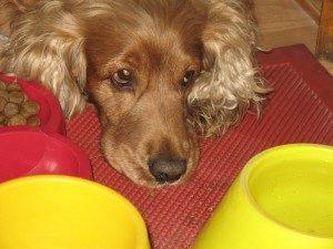 симптомы глистов у собак