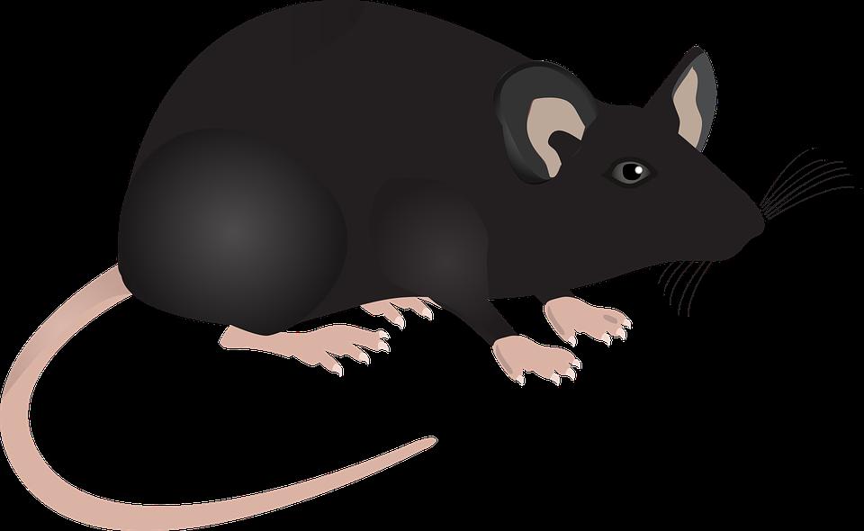 Рисунок с серой мышью