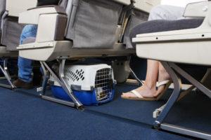 транспортировка собаки в самолете