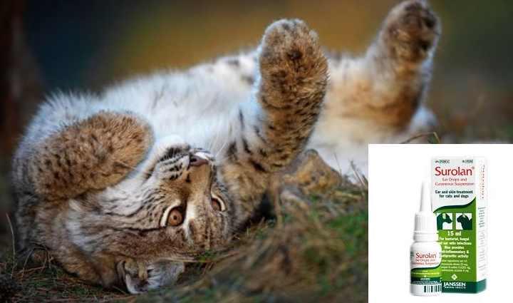 Как и чем лечить ушного клеща у кошек?