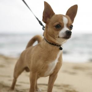 Информация про собак самых разных пород, которые существуют на планете