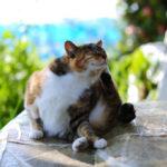 Кошка чешется, что может являться признаком наличия у нее паразитов