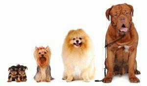 как узнать породу собаки