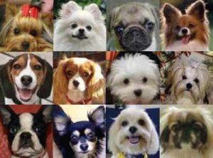 какие бывают собаки
