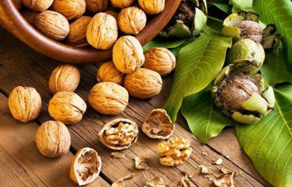 грецкие орехи и перепонки